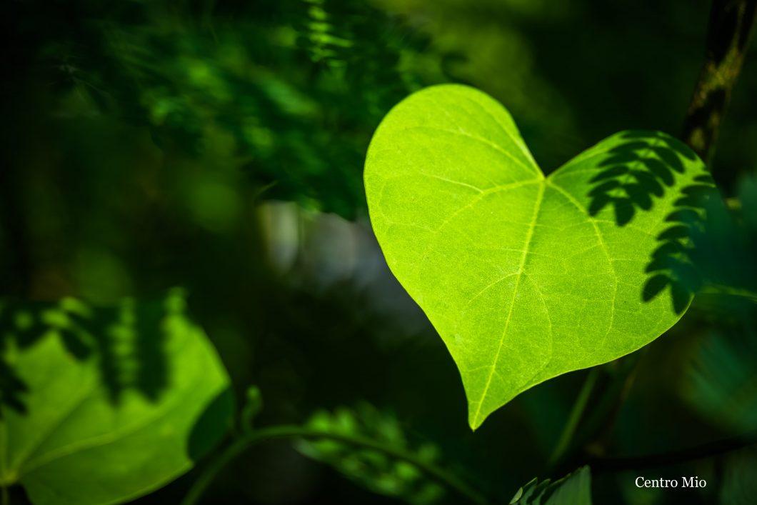 Compassie training - foto hart