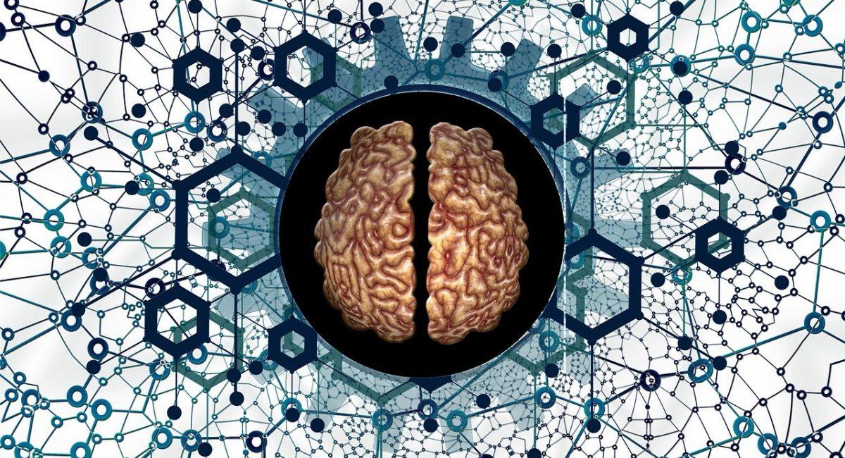 brain-hersenen met netwerk